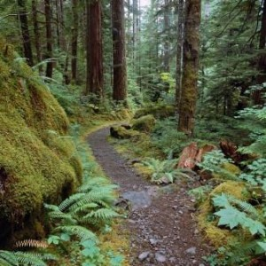 Trail in a forest; image from Office.com