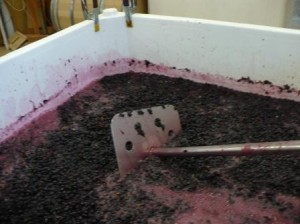 Berries in the fermentation bin and the punch down tool