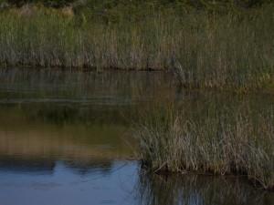 Pond on Lummi Island