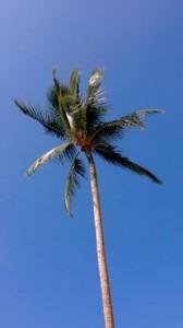 Palm tree against blue sky