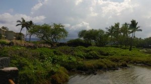 By the fresh-saltwater ponds on the Big Island