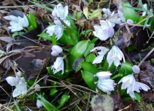 Small pale blue flowers