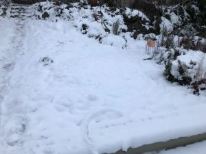 snow covering the garden